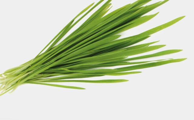CONCEPT HEALTH STORE Microgreen Hafer